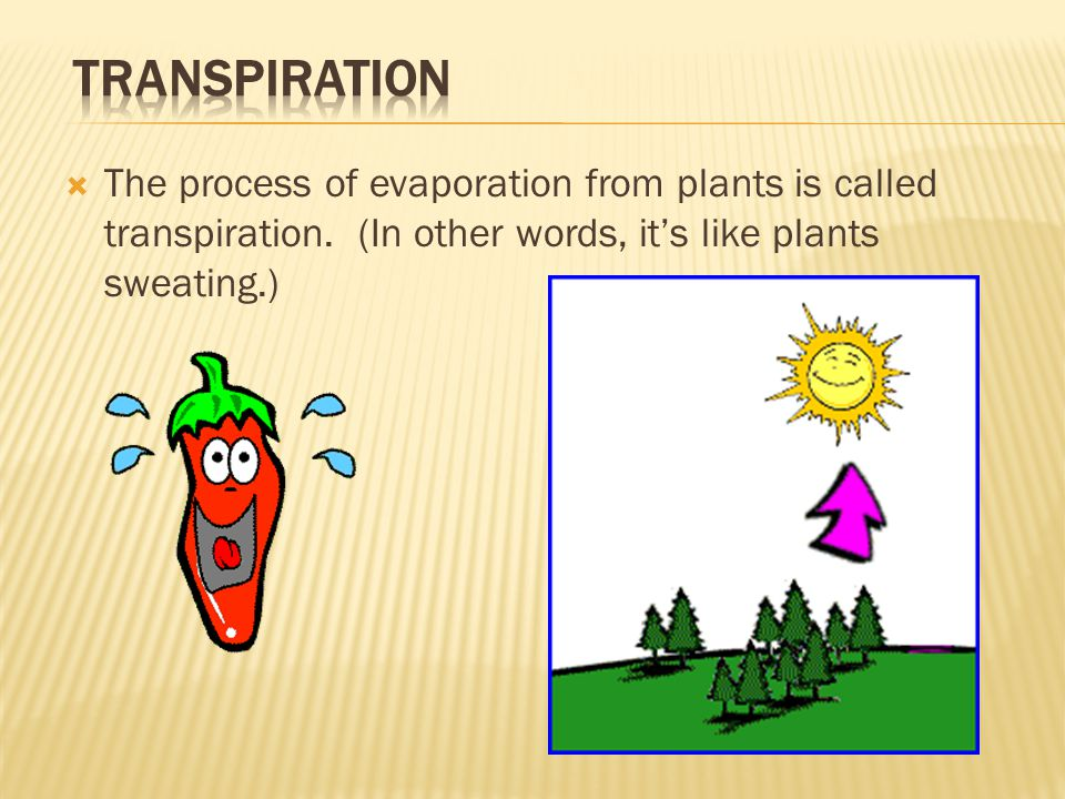  The process of evaporation from plants is called transpiration.
