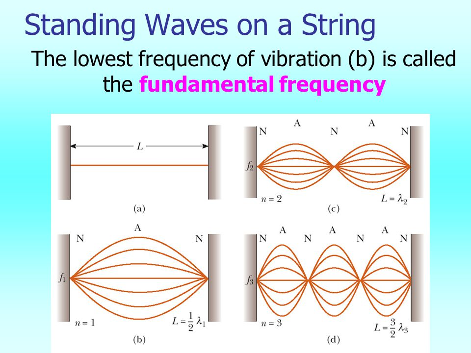 Standing Waves on a String The lowest frequency of vibration (b) is called the fundamental frequency