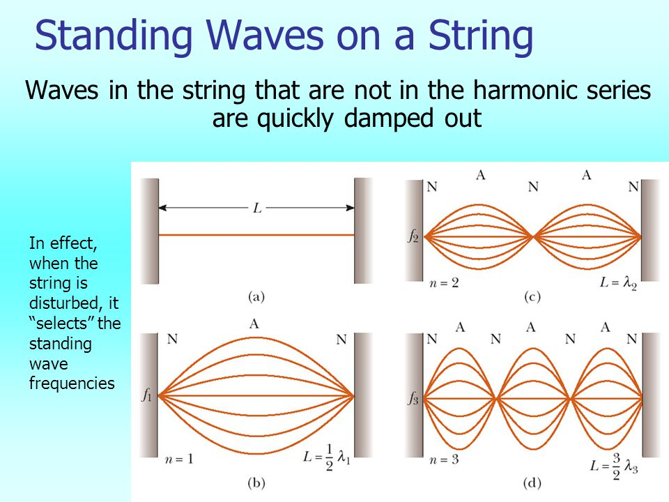 Standing Waves on a String Waves in the string that are not in the harmonic series are quickly damped out In effect, when the string is disturbed, it selects the standing wave frequencies