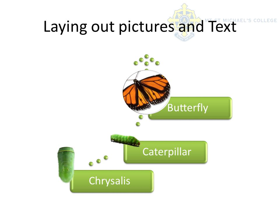 Laying out pictures and Text ChrysalisCaterpillarButterfly