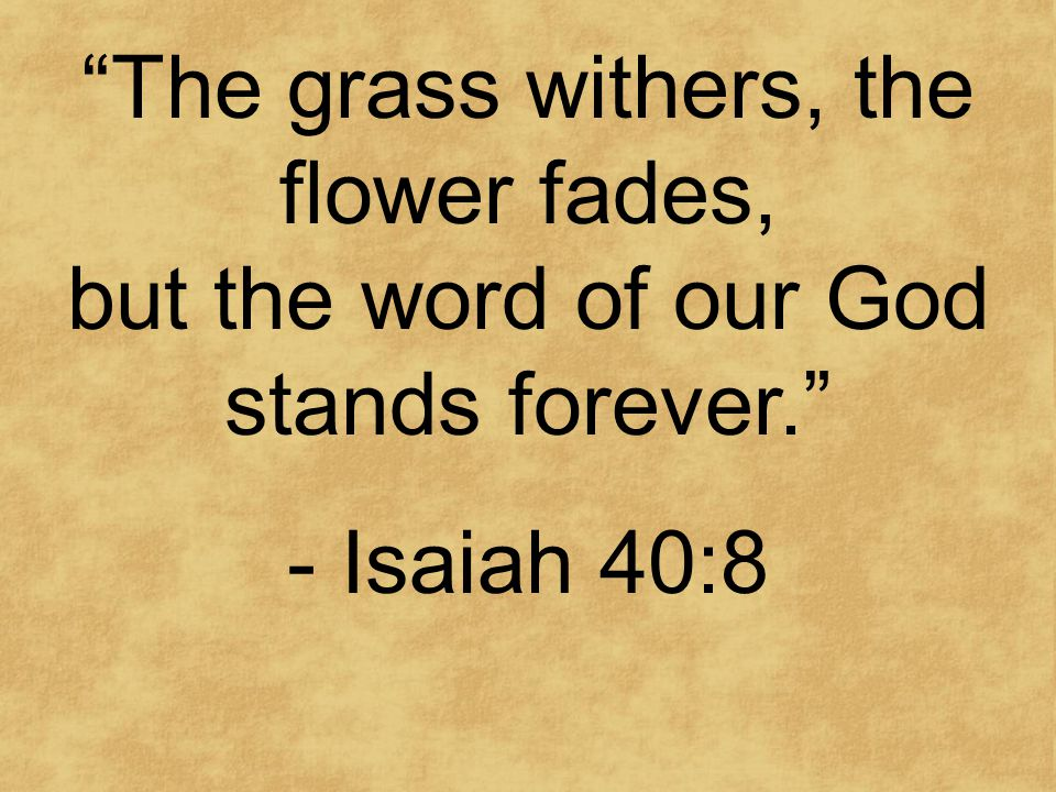 The grass withers, the flower fades, but the word of our God stands forever. - Isaiah 40:8