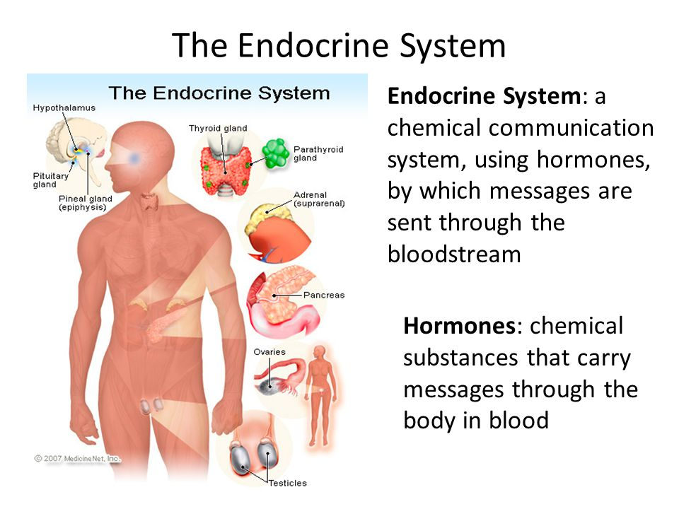 The Endocrine System Endocrine System: a chemical communication system, using hormones, by which messages are sent through the bloodstream Hormones: chemical substances that carry messages through the body in blood