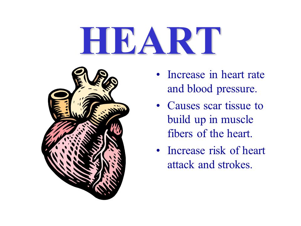 HEART Increase in heart rate and blood pressure.