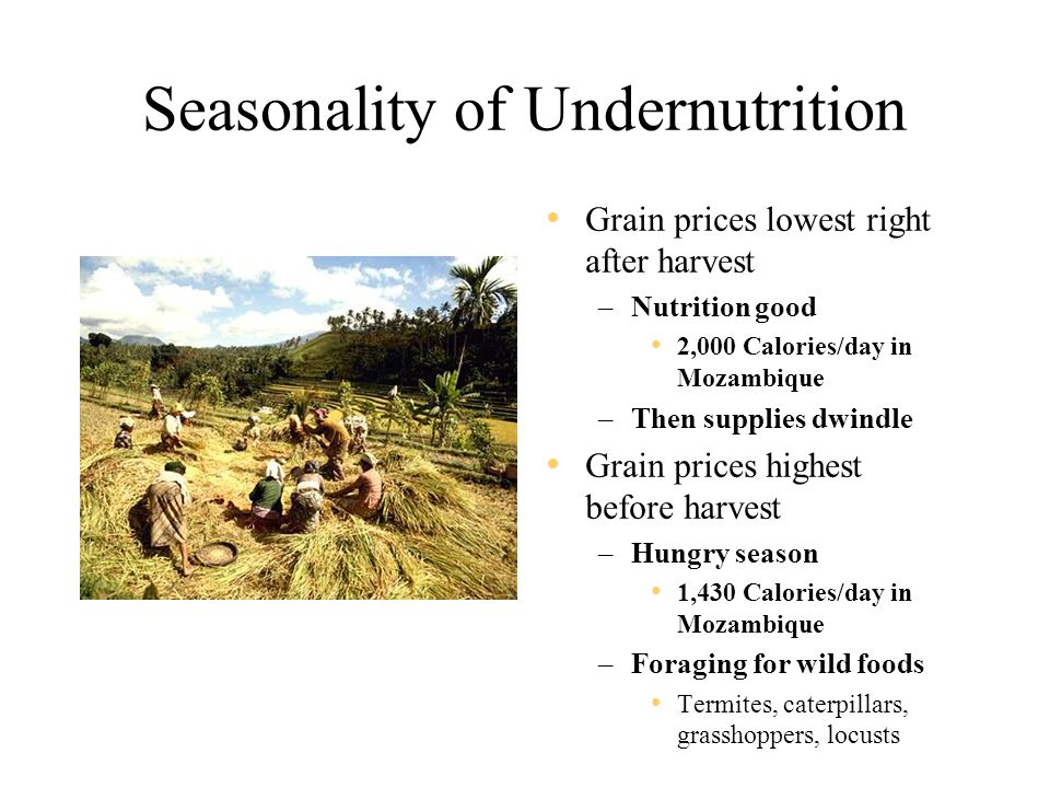 Seasonality of Undernutrition Grain prices lowest right after harvest –Nutrition good 2,000 Calories/day in Mozambique –Then supplies dwindle Grain prices highest before harvest –Hungry season 1,430 Calories/day in Mozambique –Foraging for wild foods Termites, caterpillars, grasshoppers, locusts