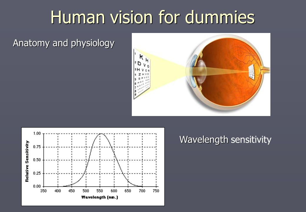 Image Enhancement In The Spatial Domain Human Vision For Dummies