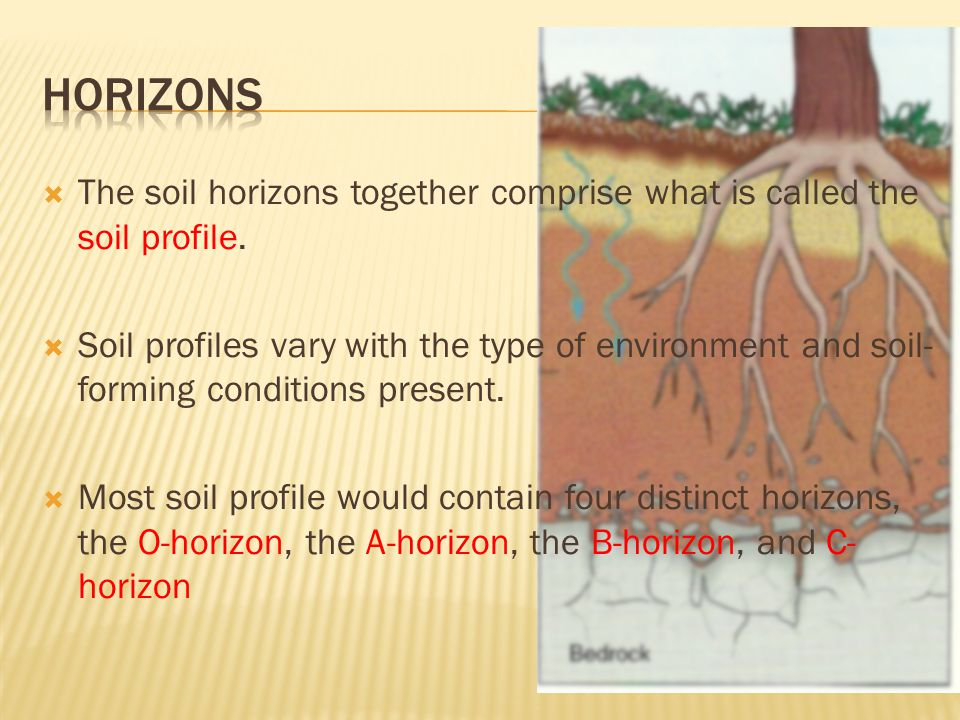  The soil horizons together comprise what is called the soil profile.