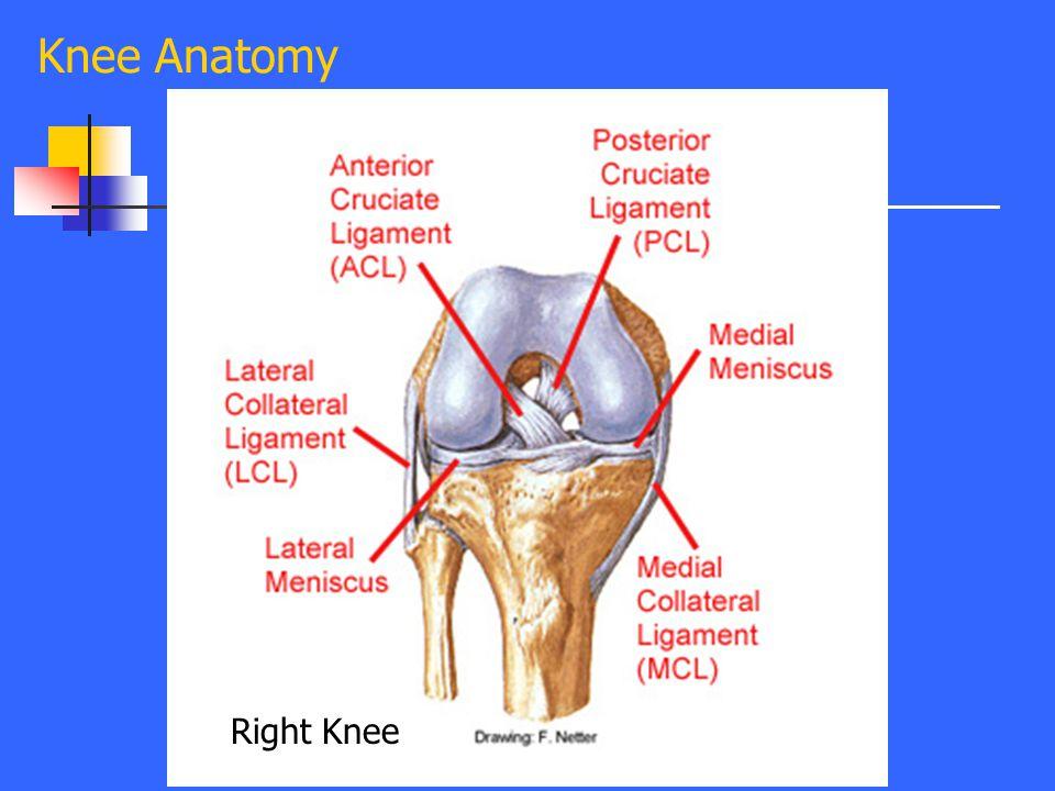 Evaluation of Common Knee Injuries Frank J. Domino, M.D. Professor ...