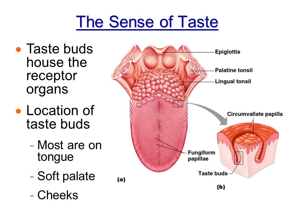 Chapter 8 Special Senses – Chemoreceptors: Taste & Smell. - ppt download