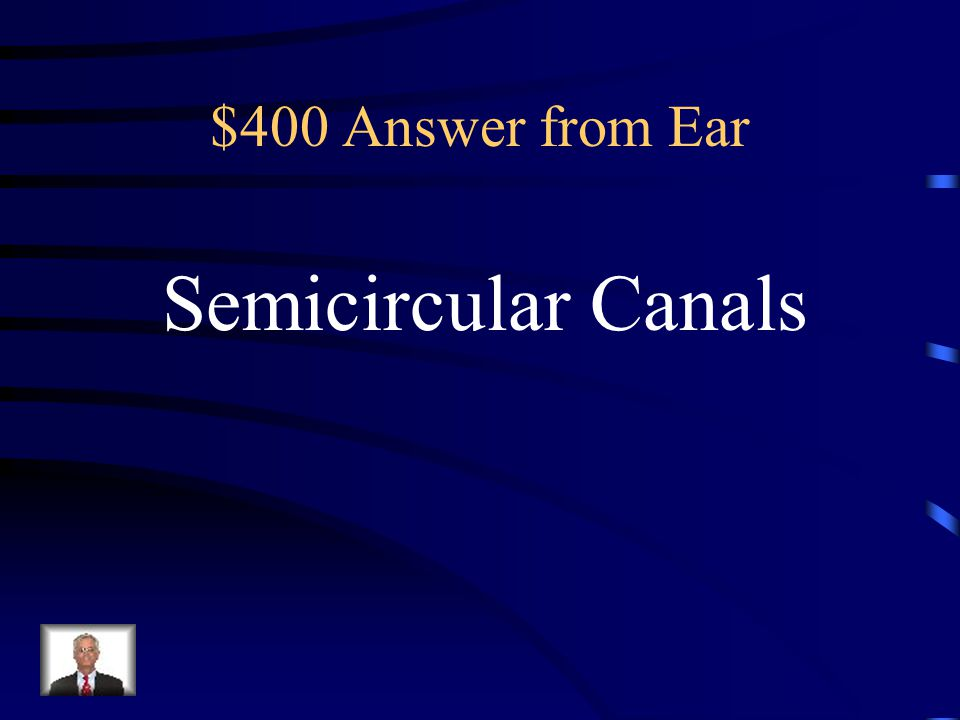 $400 Question from Ear Dynamic Equilibrium receptors are found in the __________