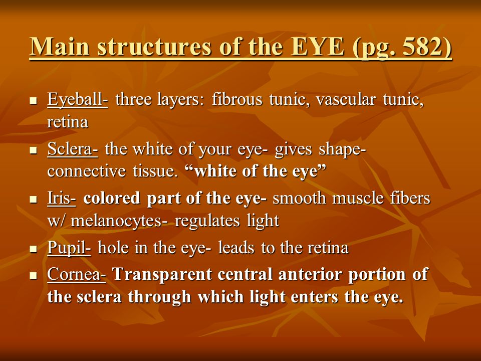 Main structures of the EYE (pg.