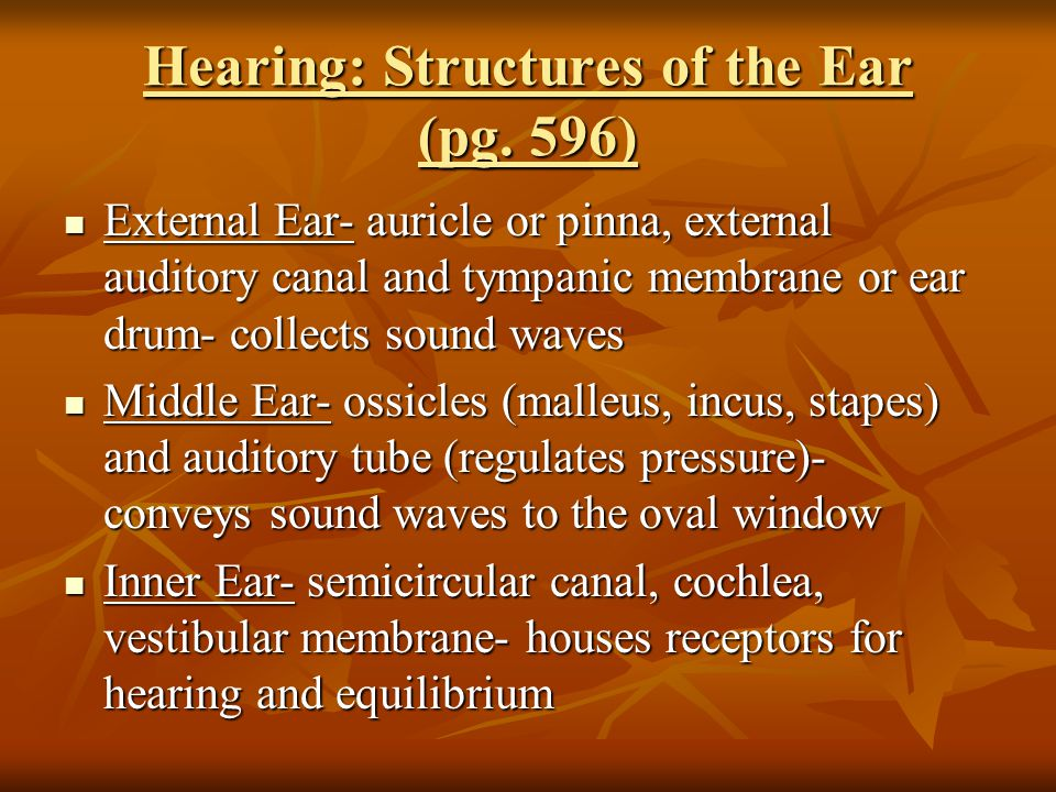 Hearing: Structures of the Ear (pg.