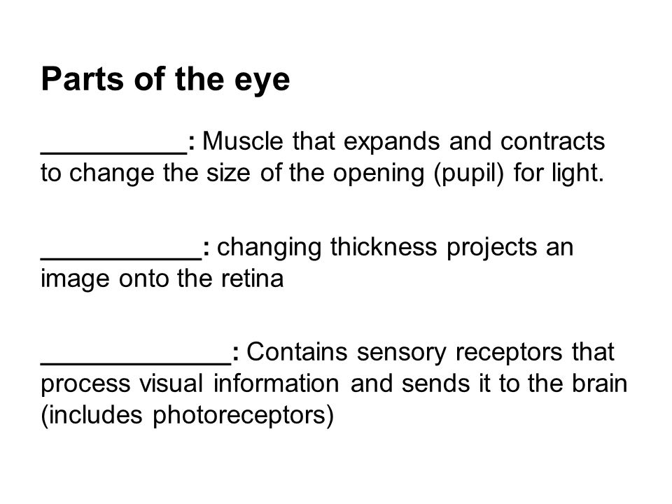 Parts of the eye __________: Muscle that expands and contracts to change the size of the opening (pupil) for light.