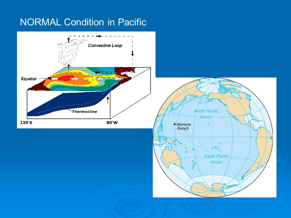 NORMAL Condition in Pacific