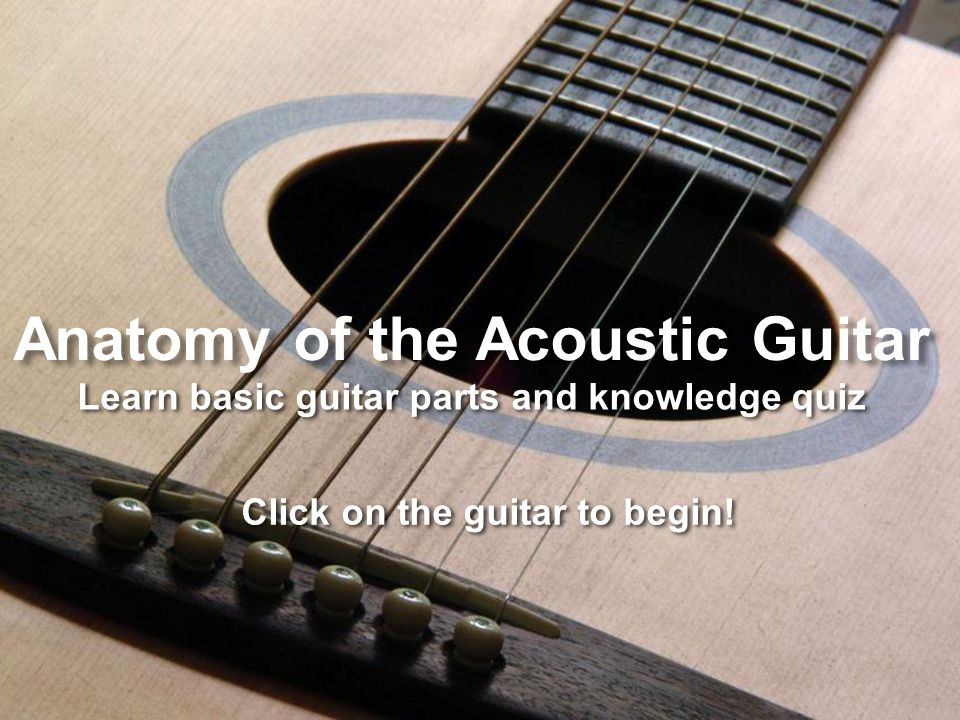 Anatomy Of The Acoustic Guitar Learn Basic Guitar Parts And