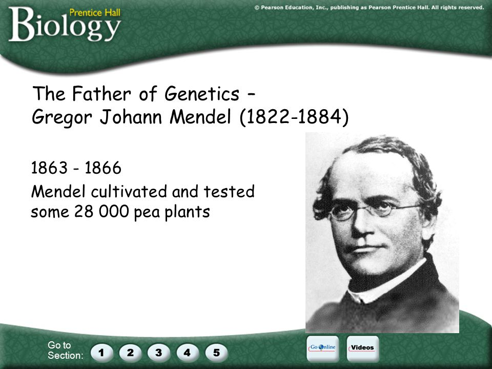 The Father of Genetics – Gregor Johann Mendel ( ) Mendel cultivated and tested some pea plants