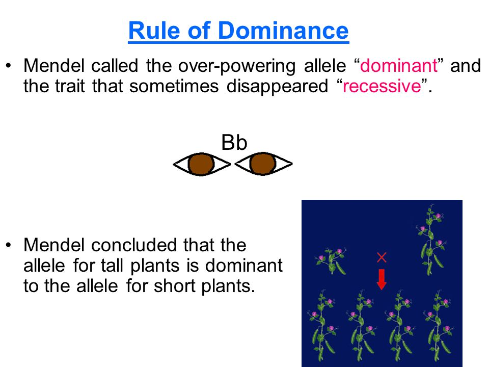 Section 10.1 Summary – pages Mendel called the over-powering allele dominant and the trait that sometimes disappeared recessive .