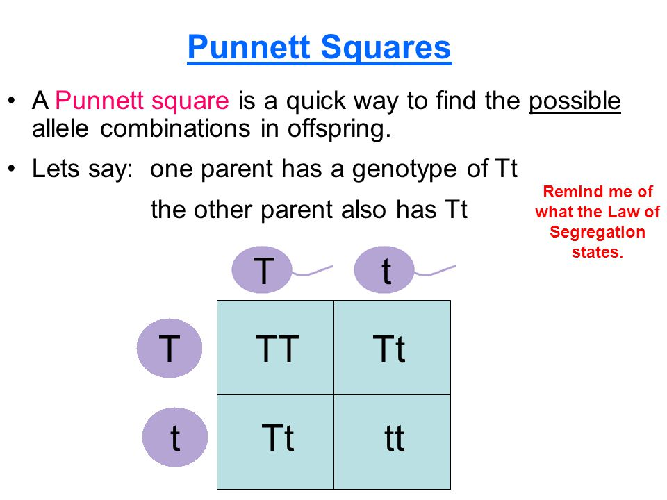 Section 10.1 Summary – pages A Punnett square is a quick way to find the possible allele combinations in offspring.
