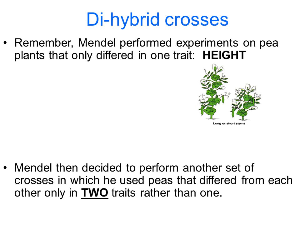 Section 10.1 Summary – pages Remember, Mendel performed experiments on pea plants that only differed in one trait: HEIGHT Di-hybrid crosses Mendel then decided to perform another set of crosses in which he used peas that differed from each other only in TWO traits rather than one.