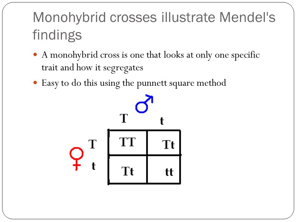 Monohybrid crosses illustrate Mendel s findings A monohybrid cross is one that looks at only one specific trait and how it segregates Easy to do this using the punnett square method