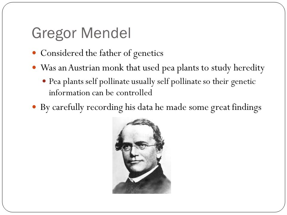 Gregor Mendel Considered the father of genetics Was an Austrian monk that used pea plants to study heredity Pea plants self pollinate usually self pollinate so their genetic information can be controlled By carefully recording his data he made some great findings