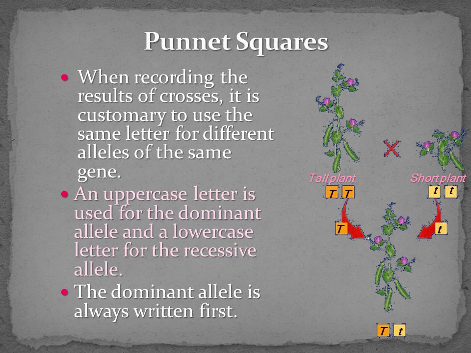When recording the results of crosses, it is customary to use the same letter for different alleles of the same gene.