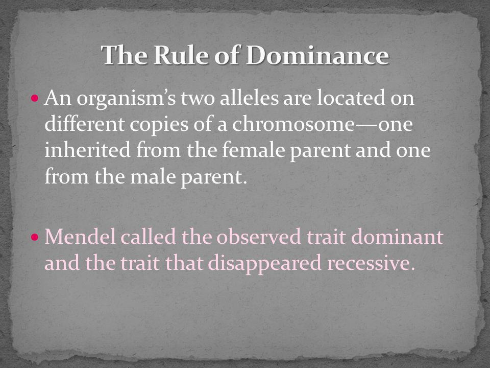 An organism's two alleles are located on different copies of a chromosome—one inherited from the female parent and one from the male parent.
