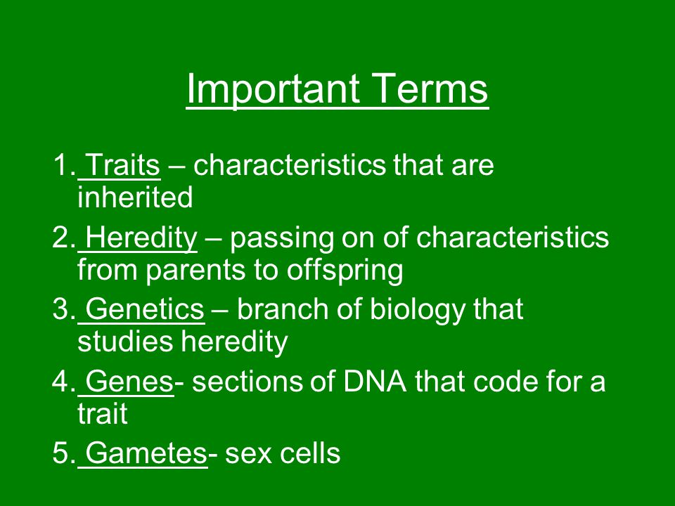 Important Terms 1. Traits – characteristics that are inherited 2.