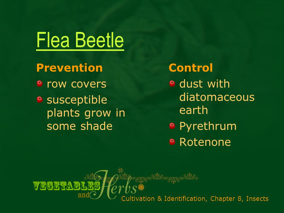 Cultivation & Identification, Chapter 8, Insects Flea Beetle Prevention row covers susceptible plants grow in some shade Control dust with diatomaceous earth Pyrethrum Rotenone