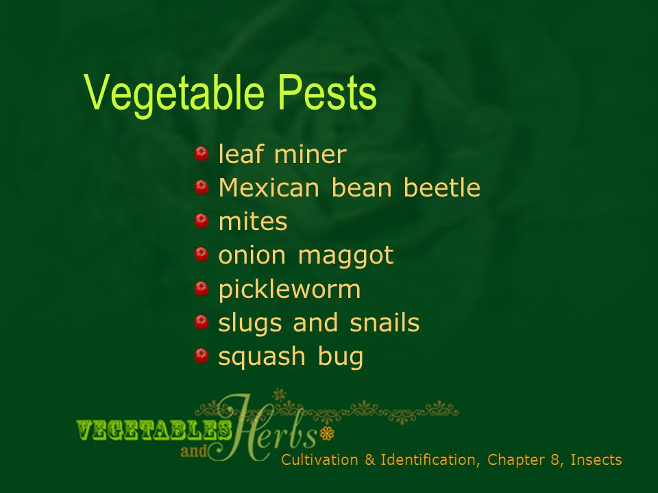 Cultivation & Identification, Chapter 8, Insects Vegetable Pests leaf miner Mexican bean beetle mites onion maggot pickleworm slugs and snails squash bug