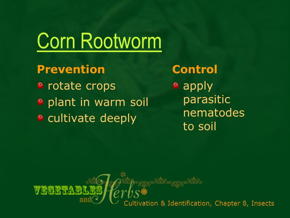 Cultivation & Identification, Chapter 8, Insects Corn Rootworm Prevention rotate crops plant in warm soil cultivate deeply Control apply parasitic nematodes to soil
