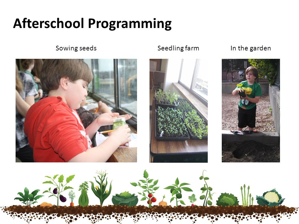 Afterschool Programming Sowing seedsSeedling farmIn the garden