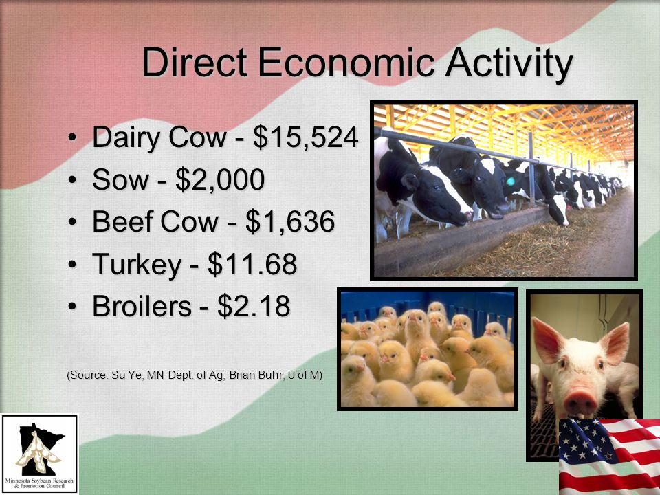 Direct Economic Activity Dairy Cow - $15,524Dairy Cow - $15,524 Sow - $2,000Sow - $2,000 Beef Cow - $1,636Beef Cow - $1,636 Turkey - $11.68Turkey - $11.68 Broilers - $2.18Broilers - $2.18 (Source: Su Ye, MN Dept.