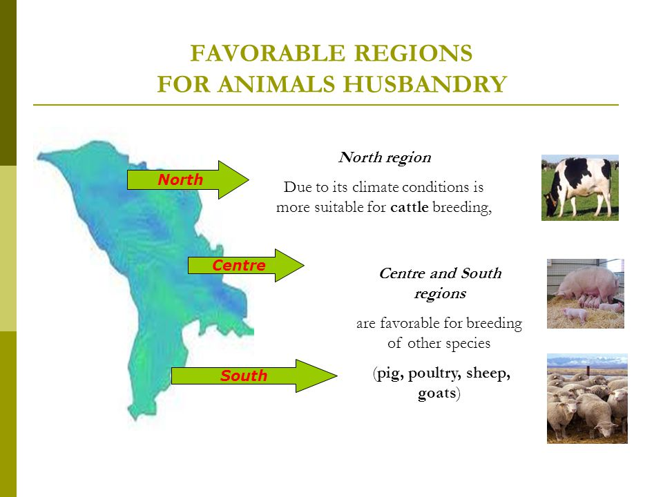 FAVORABLE REGIONS FOR ANIMALS HUSBANDRY North Centre South North region Due to its climate conditions is more suitable for cattle breeding, Centre and South regions are favorable for breeding of other species (pig, poultry, sheep, goats)