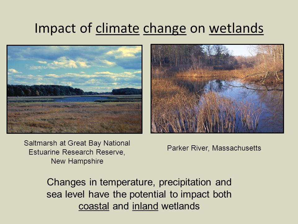 Impact of climate change on wetlands Changes in temperature, precipitation and sea level have the potential to impact both coastal and inland wetlands Saltmarsh at Great Bay National Estuarine Research Reserve, New Hampshire Parker River, Massachusetts