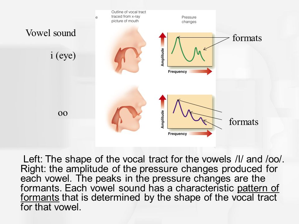 The Acoustic Signal 1 Sounds are produced by air that is pushed up from the lungs through the vocal cords and into the vocal tract Vowels are produced by vibration of the vocal cords and changes in the shape of the vocal tract by moving the articulators (i.e, lips).