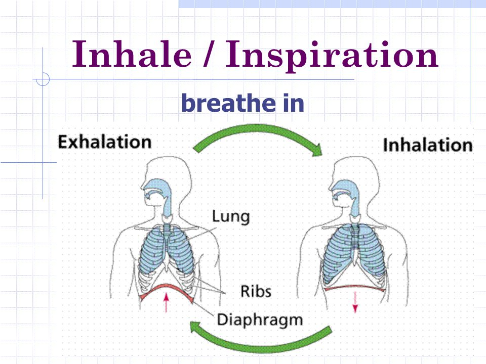 Respiratory System Every cell in your body needs oxygen for a series of chemical reactions called cellular respiration.