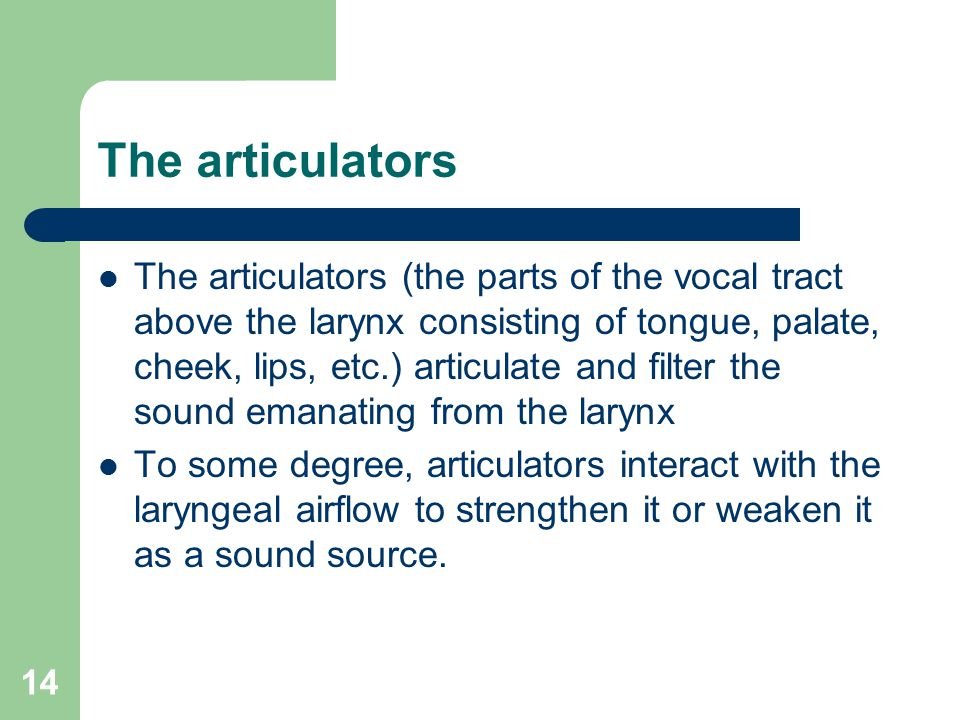 14 The articulators The articulators (the parts of the vocal tract above the larynx consisting of tongue, palate, cheek, lips, etc.) articulate and filter the sound emanating from the larynx To some degree, articulators interact with the laryngeal airflow to strengthen it or weaken it as a sound source.