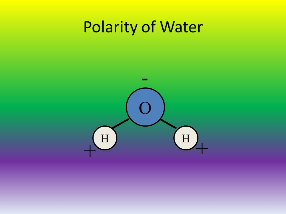 Polarity of Water O HH - + +