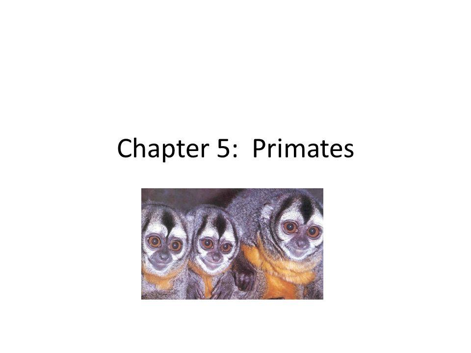 Chapter 5 Primates Primate Video Primate Characteristics