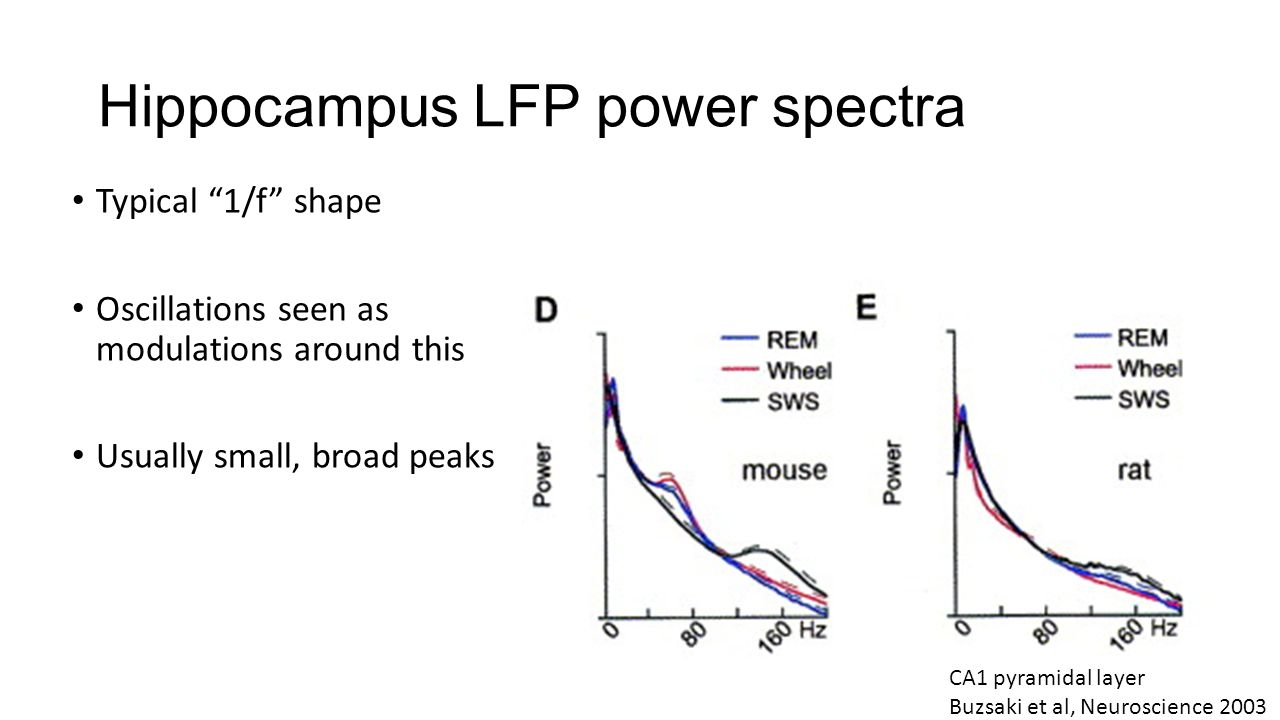 Hippocampus LFP power spectra Typical 1/f shape Oscillations seen as modulations around this Usually small, broad peaks CA1 pyramidal layer Buzsaki et al, Neuroscience 2003