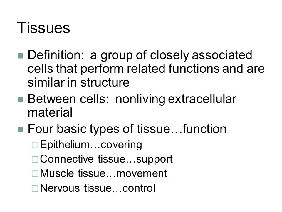 Tissues Definition A Group Of Closely Associated Cells That