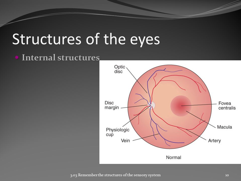Structures of the eyes Internal structures Internal structures 3.03 Remember the structures of the sensory system10
