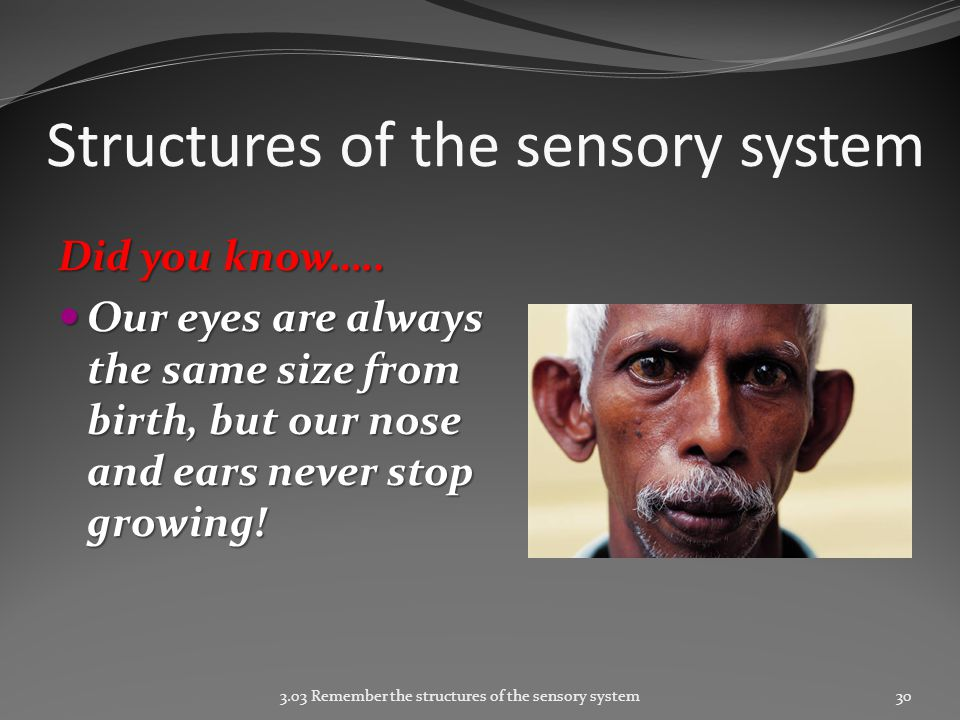 Structures of the sensory system Did you know…..
