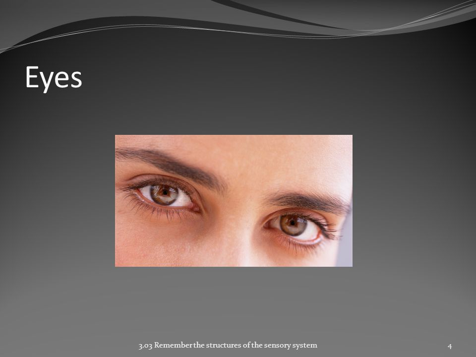 Eyes 3.03 Remember the structures of the sensory system4