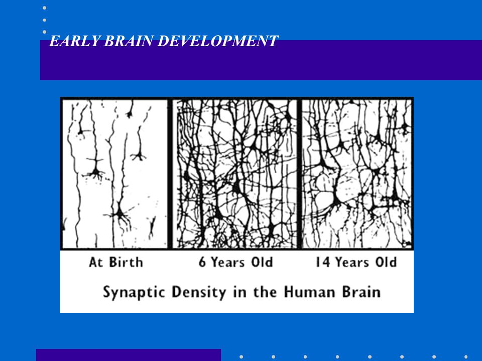 EARLIER IS BETTER: EARLY BRAIN DEVELOPMENT Brainstem - Prenatal through early infancy Limbic system (Amygdala, hippocampus: emotion, memory) - Late infancy to 4 years Cerebral cortex (Reasoning, behavior inhibition) - Toddler Language - auditory cortex by 1 year Capacity for logic & complex reasoning by age 4 years