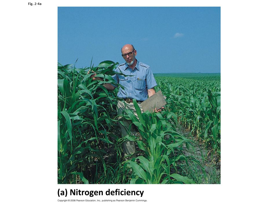 Fig. 2-4a (a) Nitrogen deficiency