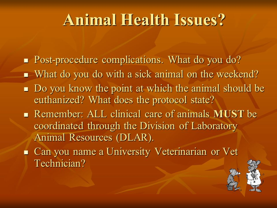 Animal Health Issues. Post-procedure complications.