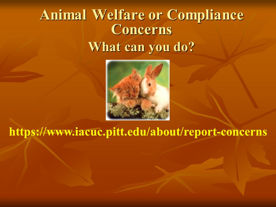 Animal Welfare or Compliance Concerns What can you do.