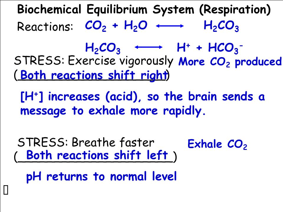 Biochemical Equilibrium System (Respiration) Reactions: STRESS: Exercise vigorously (____________________) STRESS: Breathe faster (_____________________) CO 2 + H 2 O H 2 CO 3 H 2 CO 3 H + + HCO 3 - More CO 2 produced Both reactions shift right [H + ] increases (acid), so the brain sends a message to exhale more rapidly.