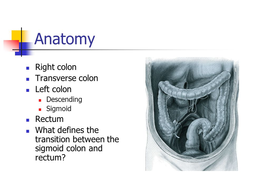 Basic Science Large Bowel Anatomy Right Colon Transverse Colon